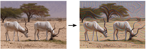 Ibex grazing, pre- and post-edge detection. Photograph: Google